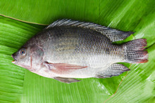 Tilapia Fish Freshwater For Co...