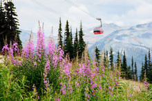 Whistler, BC / Canada - August...