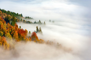 FototapetaAutumn forest on the mountain slope with fog