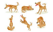 Collection Of Funny Brown Dog In Different Situations Set, Cute Cheerful Animal Cartoon Character Vector Illustration