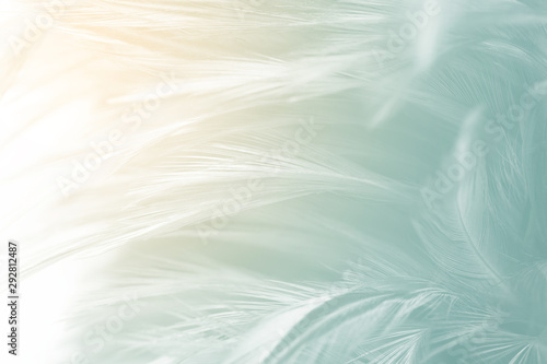 Fotografie, Obraz  Beautiful feather color light green pattern  texture background with orange ligh