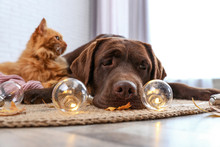 Cute Cat And Dog With Fairy Lights Lying On Floor Indoors. Warm And Cozy Winter