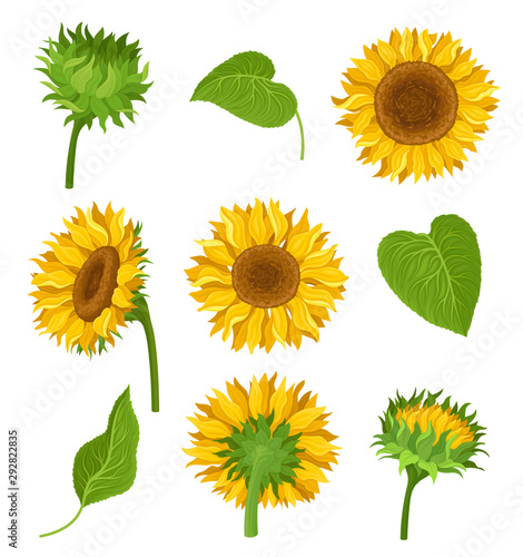 Photo The Set Of Sunflowers With Different Elements And Details Vector Illustrations