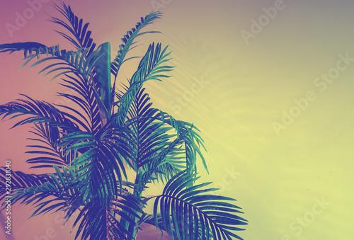 Fototapeta tropiki   palm-tree-on-wall-background-vintage-retro-toning-photo-abstract-background