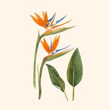 Watercolor Strelitzia Flowers ...