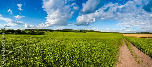 Keuken foto achterwand Cultuur fresh green Soybean field hills, waves and dirt road with beautiful sky