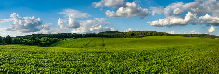 fresh green Soybean field hills, waves with beautiful sky