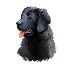 Newfoundland Puppy Purebred Of Large Size Digital Art