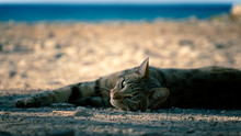 Lazy Cat On Beach