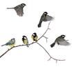 Leinwanddruck Bild - isolated six tits on tree branch