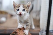 Little Striped Kitten Is Looki...