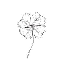 Clover Sketch. Hand Drawn Four...