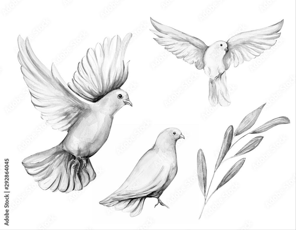 Fototapeta Peace bird, dove, art, water color drawing