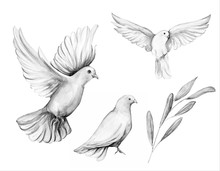 Peace Bird, Dove, Art, Water C...
