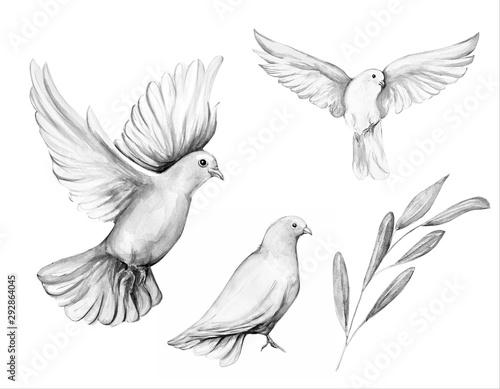 Fotografie, Obraz  Peace bird, dove, art, water color drawing