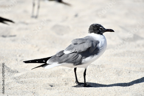 sea gull seagull bird on beach, photo as a background Fototapeta