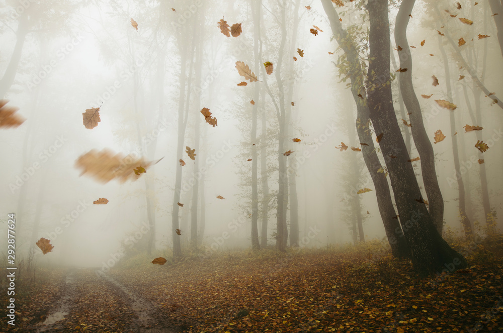 Fototapeta falling leaves blowing in the wind in autumn forest landscape