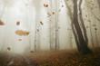 Leinwanddruck Bild falling leaves blowing in the wind in autumn forest landscape