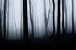 Leinwanddruck Bild dark scary horror forest scene