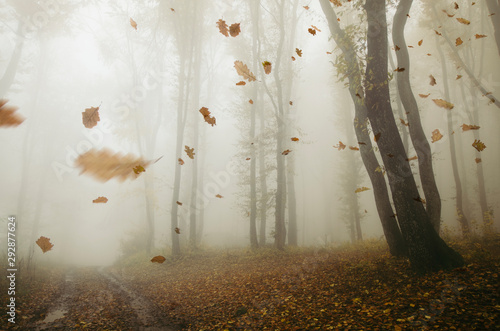Leinwand Poster falling leaves blowing in the wind in autumn forest landscape