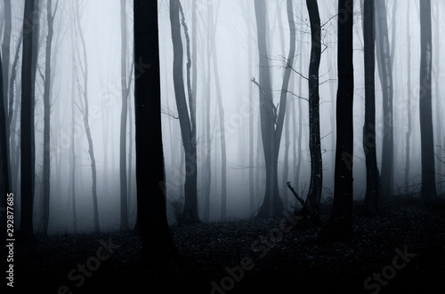 dark scary horror forest scene Wallpaper Mural