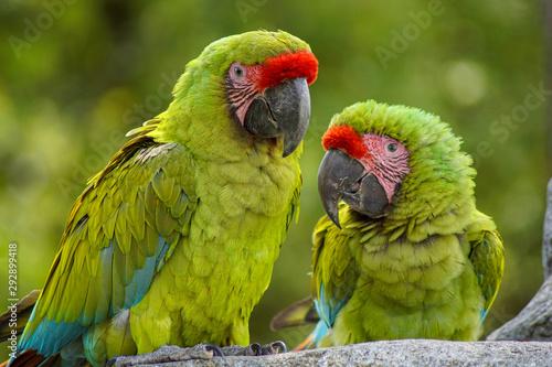 Autocollant pour porte Perroquets couple de perroquets