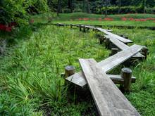 小石川後楽園の板橋と満開の彼岸花 9月