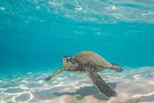 Sea Turtle Swimming Over Sand ...