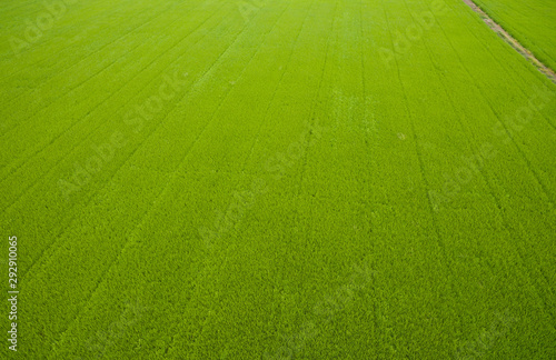Pays d Asie aerial view from flying drone of Field rice with landscape green pattern nature background, top view field rice