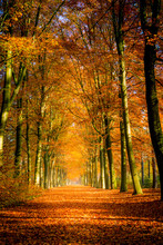 Autumn Avenue, Leaves On The Ground, With Trees Lined Up On A Sunny Day