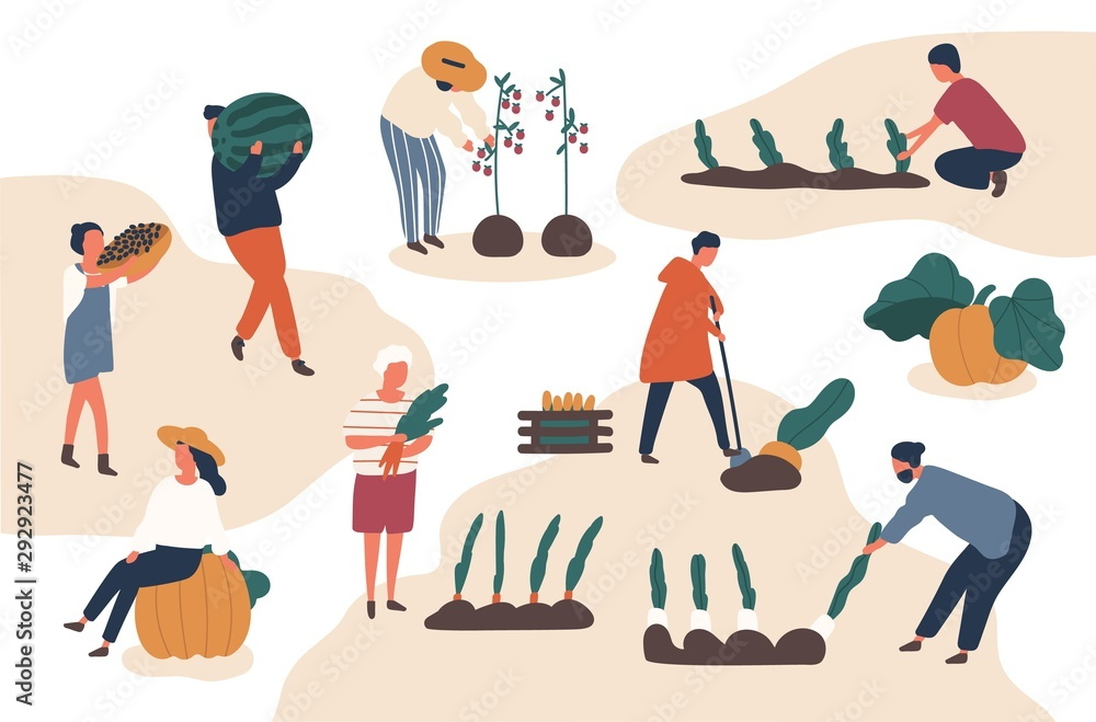 Fototapety, obrazy: Autumn harvesting flat vector illustrations set. Farmers working in field. Fruits and vegetables crops fall season harvest collecting. Female and male farm workers, gardeners isolated characters.