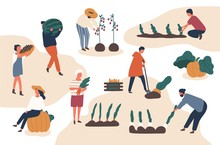 Autumn Harvesting Flat Vector Illustrations Set. Farmers Working In Field. Fruits And Vegetables Crops Fall Season Harvest Collecting. Female And Male Farm Workers, Gardeners Isolated Characters.