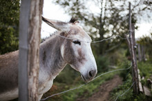 Donkey Portrait. Nice Animal.