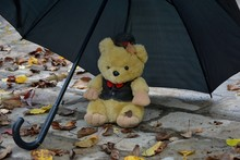A Lone Toy Bear Left Under An Umbrella In The Rain In Autumn