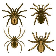 Set Of Spider Illustration In ...