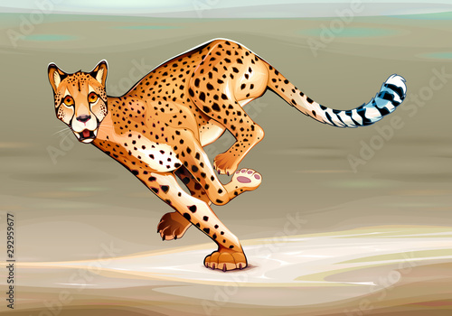 Running cheetah in the savannah.