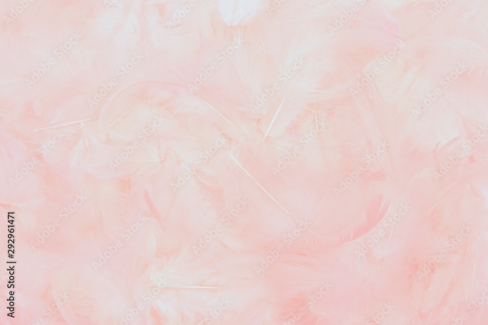 Fototapety, obrazy: beautiful soft pink feathers background