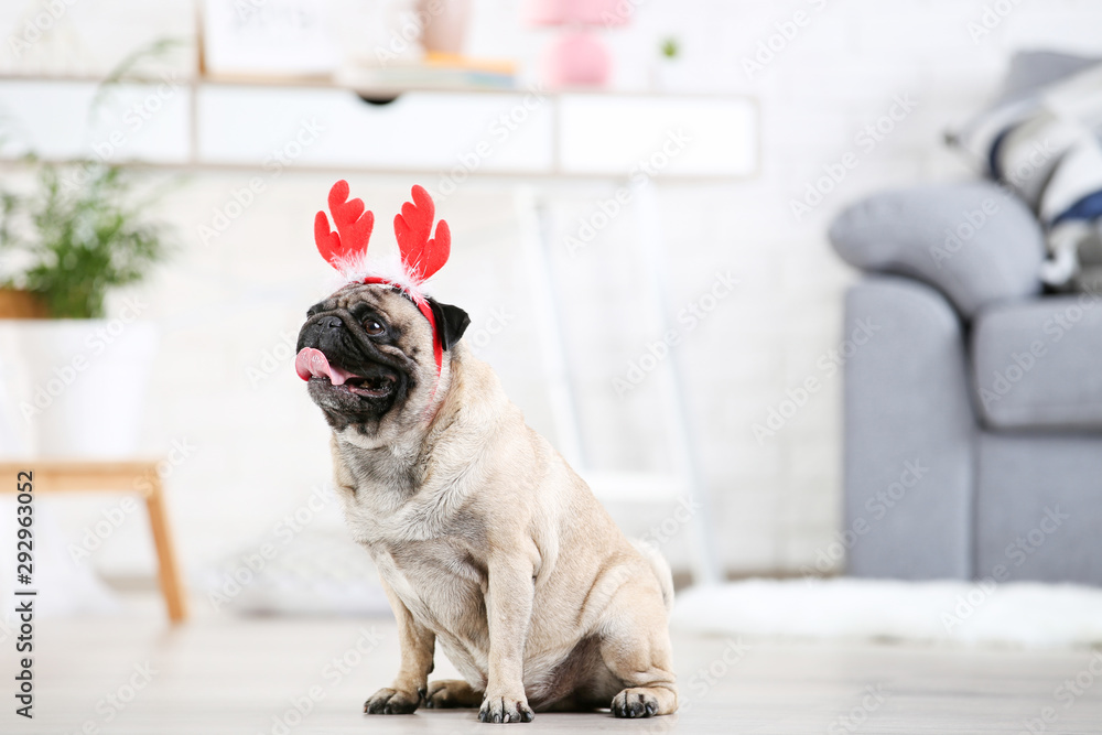 Pug dog in red horns sitting on the floor at home