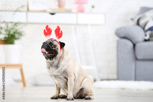 plakat Pug dog in red horns sitting on the floor at home
