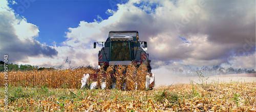 Photo Harvesting corn with a red harvester on a hot sunny day.
