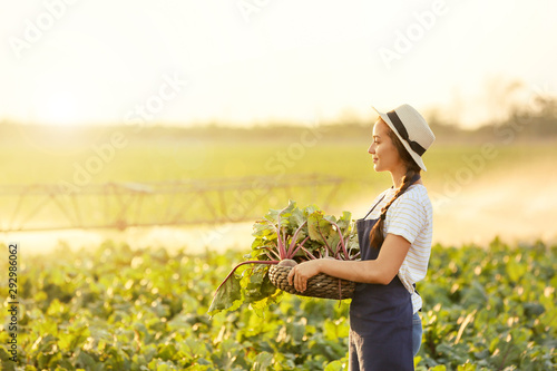 Fototapeta  Female farmer with harvest of beetroots in field