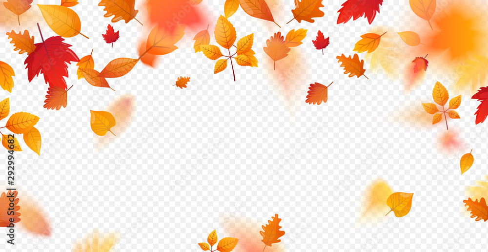 Fototapety, obrazy: Orange fall colorful leaves flying falling effect.