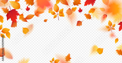 Fototapeta Orange fall colorful leaves flying falling effect. obraz
