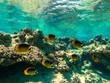 Leinwanddruck Bild Underwater photo of ocean