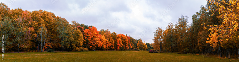 Fototapeta Warm autumn panorama of the lowland in the Park with yellowed and reddened trees stretching into the distance to the horizon with a blue sky covered with clouds, Indian summer in the forest, field