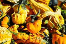 Colorful Orange And Green Decorative Pumpkins And Gourds In The Fall