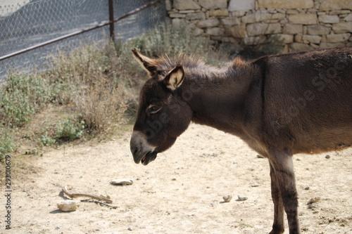 Photographie bourriquet : âne