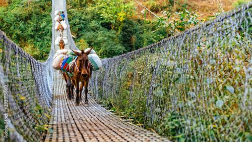 Canvas Print Donkeys crossing metal suspension bridge in Nepal, Himalayas, Manaslu circuit trek