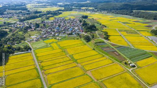 Photo Paddy field in autumn-1