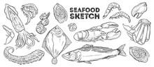 Seafood Sketch Set. Hand Drawi...